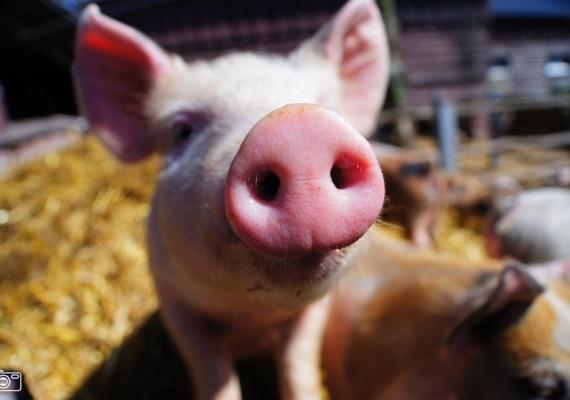 Een heuse boerderij op de Heuvel in Oss....Op een koopzondag in het centrum kon er geknuffeld worden met dieren, waren een diverse workshops en proeverijtjes vers van het land. Een heuse boerderij op de Heuvel in Oss....Op een koopzondag in het centrum kon er geknuffeld worden met dieren, waren een diverse workshops en proeverijtjes vers van het land. Een heuse boerderij op de Heuvel in Oss....Op een koopzondag in het centrum kon er geknuffeld worden met dieren, waren een diverse workshops en proeverijtjes vers van het land.