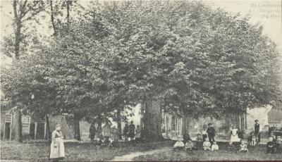 Lijndenboom